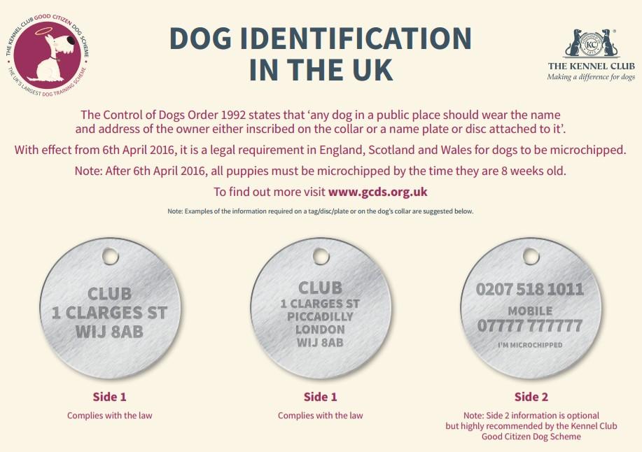 kennel club dog tag id guide